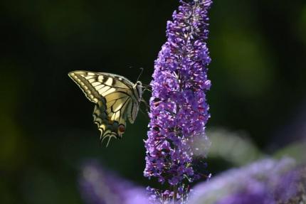 Vlinderweekend