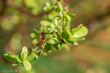 Bijenleven