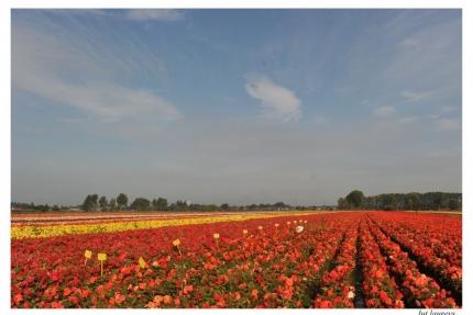 begoniaveld Beeweg 22 Zaffelare Luc - Wim VDSypt