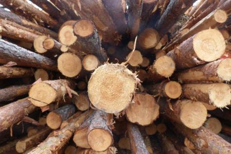 hout verbranden