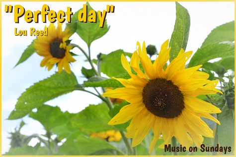 Music on Sundays - Perfect Day