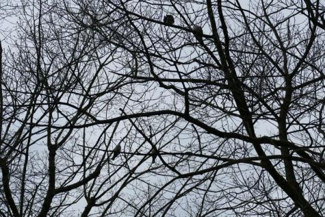 seven oaks zeveneken