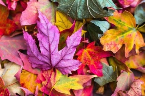 De herfst is in het land
