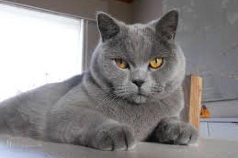 Dot de kat