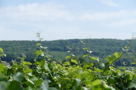 Bezoek Champagne in Pierry en Oueilly