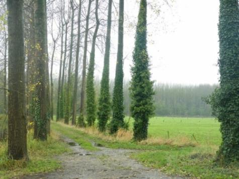 Bossen en natuur in Vlaanderen