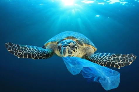 Reef Xplorers en plasticsoep