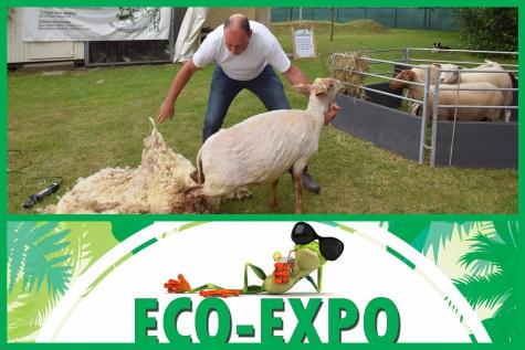 Eco Expo Lochristi 2018 Orphanimo