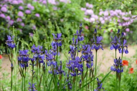 Fietstocht langs eco-tuinen en Wedstrijd mooiste tuin