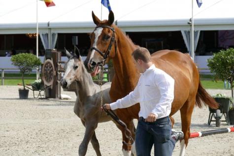 Veulenveiling Flanders Horse Event