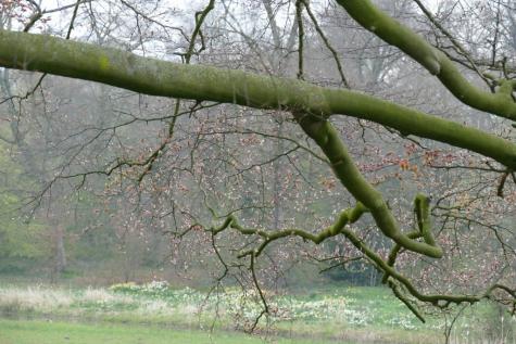 park kasteel Beervelde