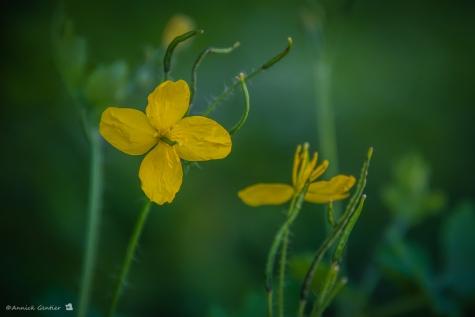 Wilde planten wandeling Velt