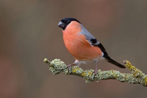 Vogel van het jaar