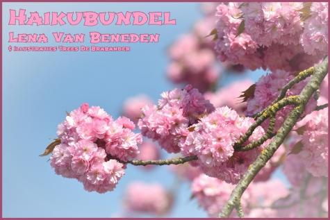 Haiku Lena Van Beneden bloesem