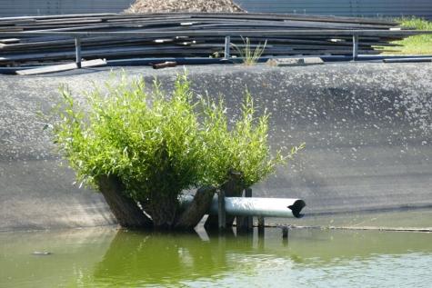watervoorraad  opvang bloemisterij