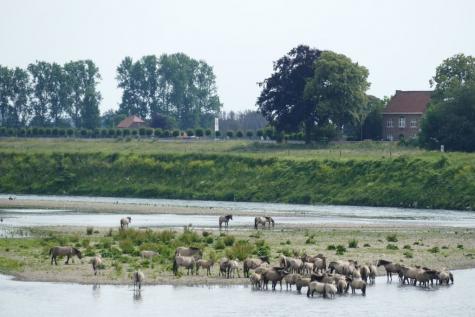 Maasvallei Maaseik Limburg
