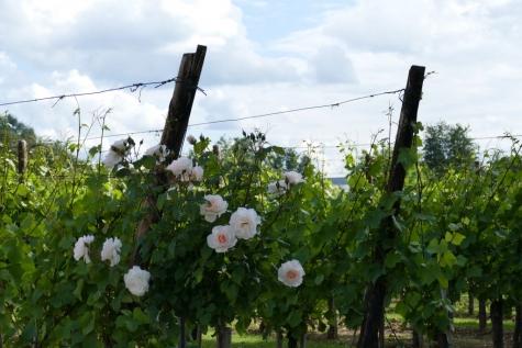 wijndomein Aldeneyk