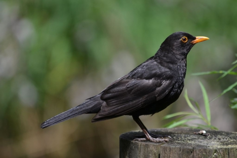 Vogel van het jaar 2018