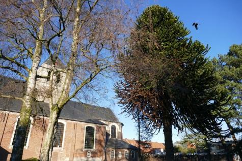 parkje kerk Lochristi