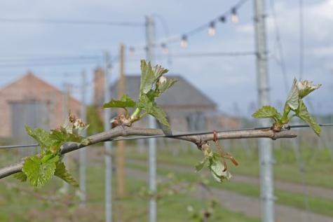 wijn domein nobel lente 2021