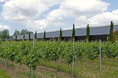 wijngaard Nobel Lochristi