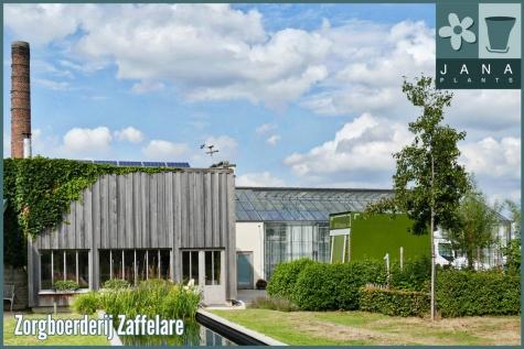 Zorgboerderij Zaffelare Blom Vivant vzw